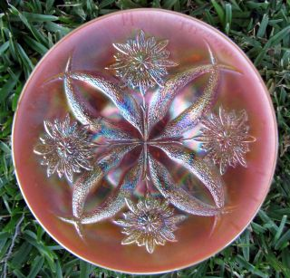Dugan's Four Flowers Peach Opalescent Carnival Glass Plate Smooth Back CA 1915