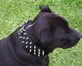 Large Breed Spiked Black Crocodile Leather Dog Collar STAFFY Stud Studded Spike