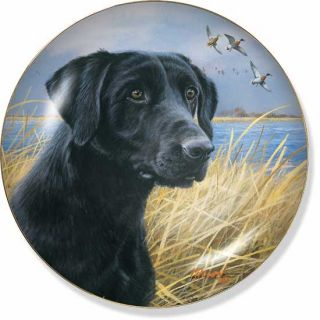 Black Labrador Retriever Dog Collector Plate in The Marsh by Jim Killen