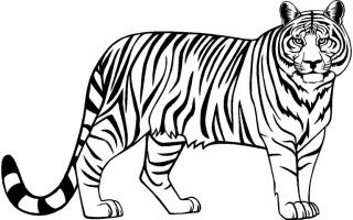 Extra Large Tiger Vinyl Decal Car Truck Window Sticker