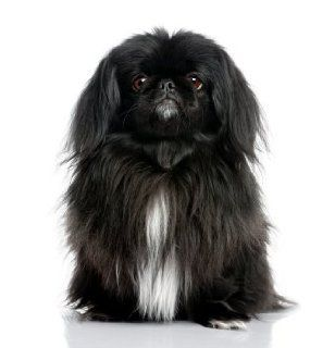 Pekingese ~ Dog Breed ~ Edible Image Cake / Cupcake Topper