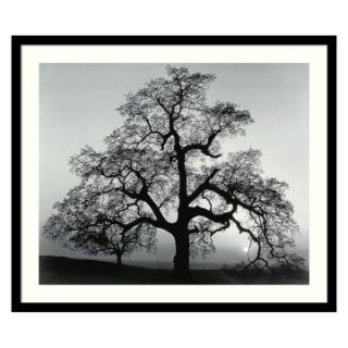 Oak Tree, Sunset City, California, 1962 Framed Wall Art by Ansel Adams   Photography